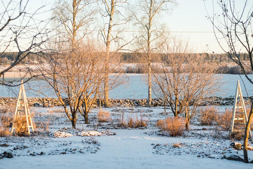 Talvisen potagerin keskikäytävä aamuauringon valossa