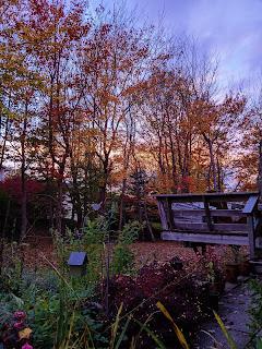 Maple Trees On An Autumn Evening