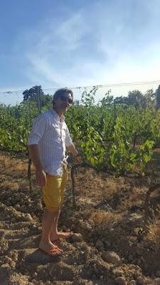 Matteo Cantoni of Fattoria Fibbiano winery