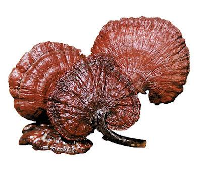 Reishi mushroom farming training in Latur