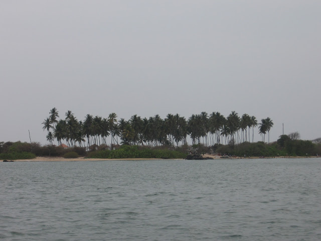 Coconut palms, St.Mary's Island