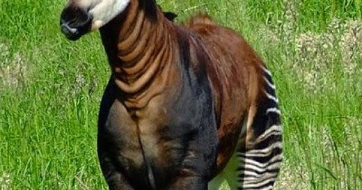 I 10 animali pi belli del mondo bgas for I mobili piu belli del mondo