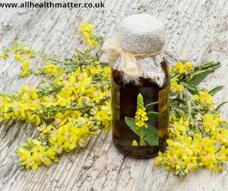 Mullein Types Of Herbs