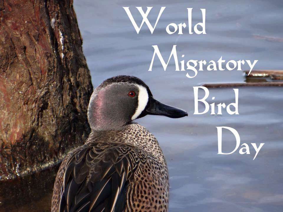 World Migratory Bird Day Wishes Images