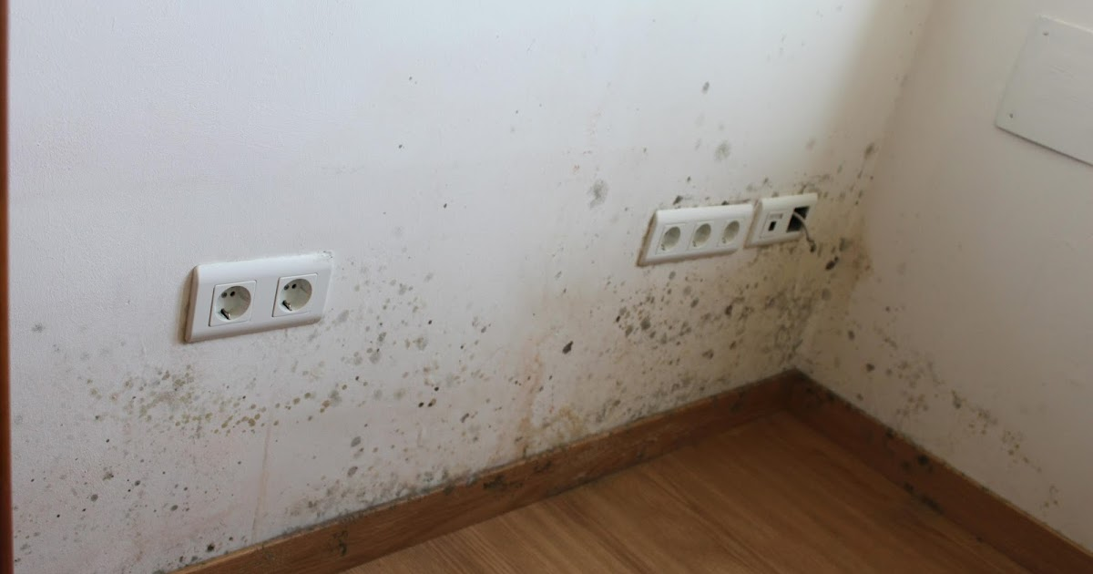 Pintura y decoraci n holanda c mo eliminar el moho de - Como eliminar la humedad de la pared ...