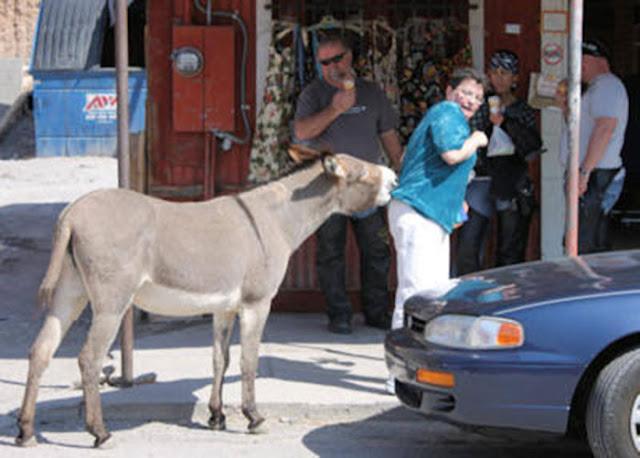 Keledai Mengamuk