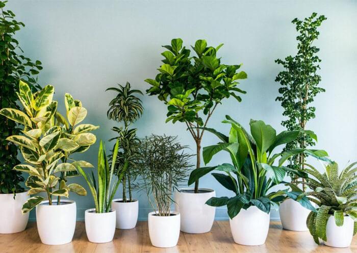 Soluzioni ecosostenibili per la casa: le piante