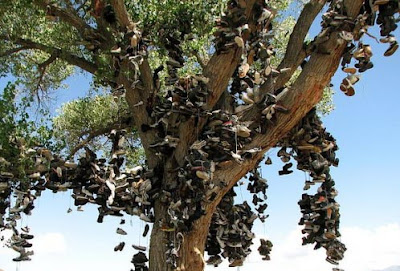 Nevada old shoe tree