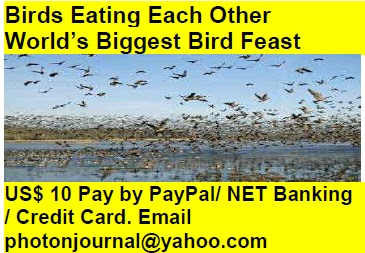 Birds Eating Each Other  World's Biggest Bird Feast bird story book