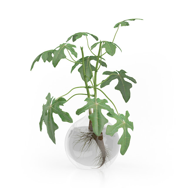 3D model free -  Plants_07