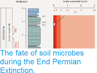 https://sciencythoughts.blogspot.com/2015/01/the-fate-of-soil-microbes-during-end.html