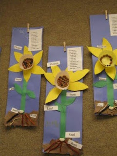 Lovely Daffodil Flower Display