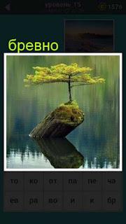 в воде торчит бревно на котором растет маленькое дерево