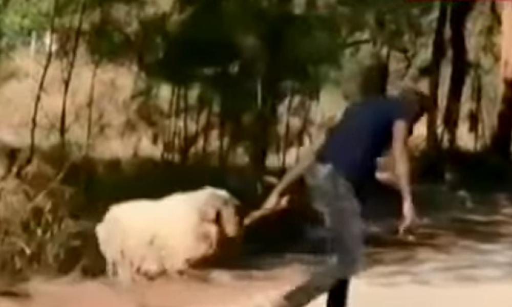 Άργος: Μετανάστες Αρπάζουν Πρόβατα Από Τσοπάνηδες - ΒΙΝΤΕΟ