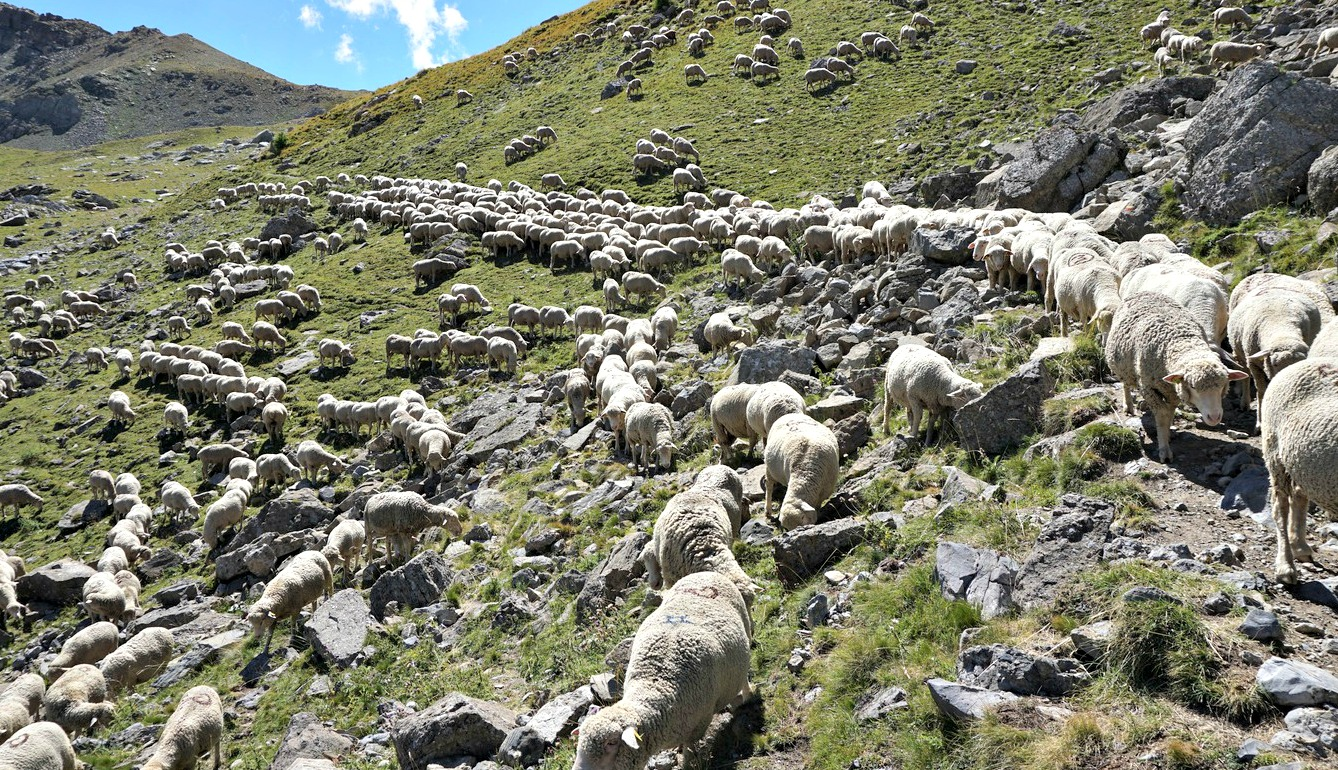 Rush hour on trail to Col d'Encombrette