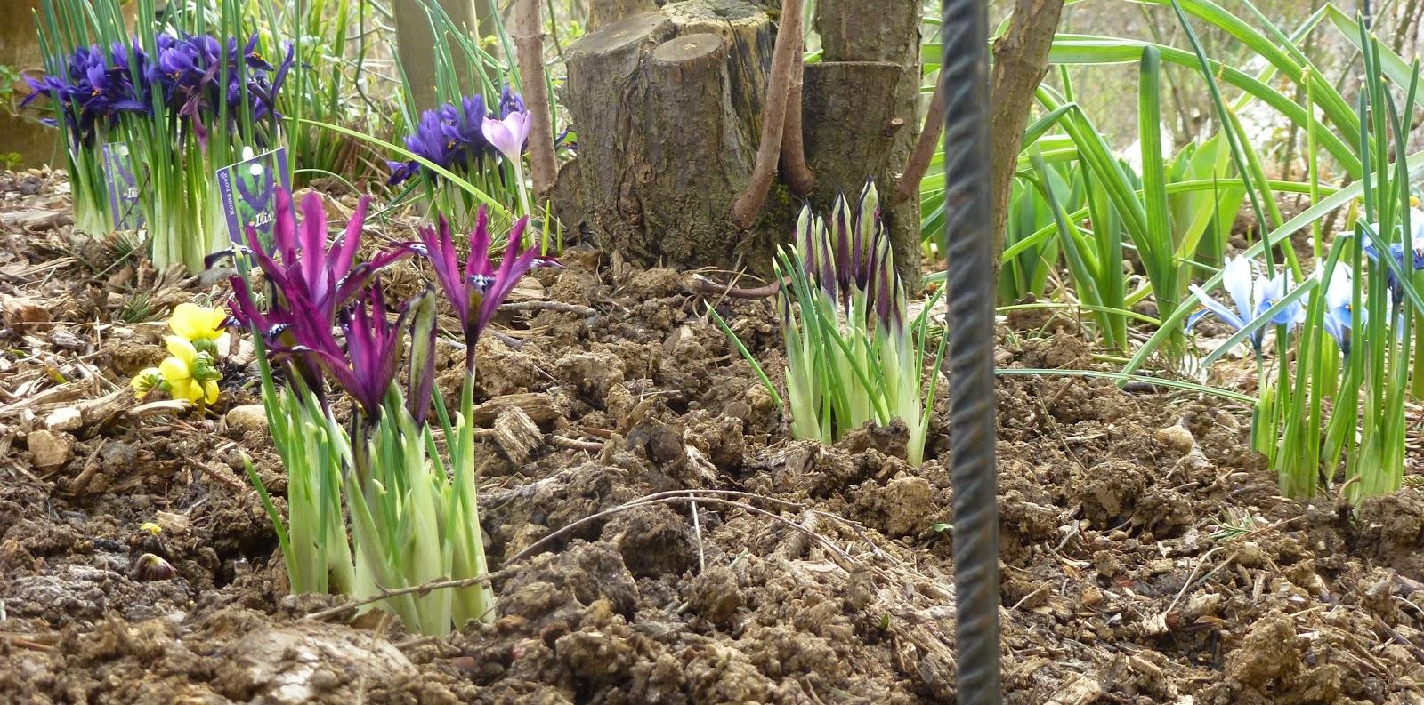 Le jardin des grandes vignes petits bulbes - Le jardin des grandes vignes ...