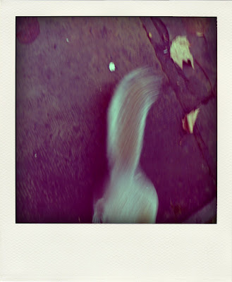 scooting squirrel