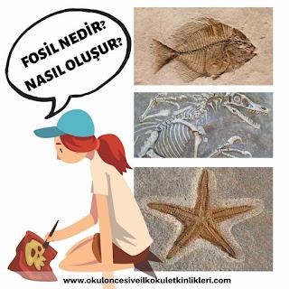 fosil nasıl oluşur 4.sınıf