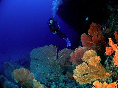 momen wisata bawah laut di Aceh