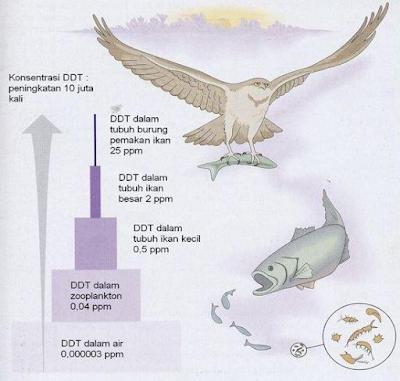 Gambar   Magnifikasi biologis DDT dalam Suatu Rantai Makanan