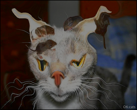Photoshopped Cat picture • Trippy cat high on catnip living a nightmare with 4 baby mice on his head haha