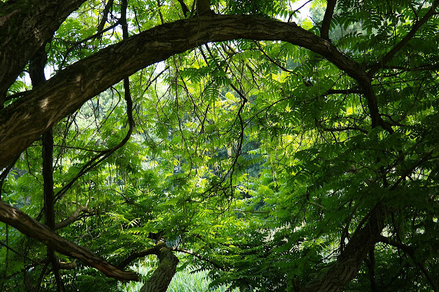 Multa por Desmatamento de Floresta Nativa.