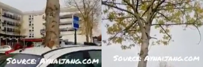 SO STRANGE: A Tree Grew Overnight In France And Busted A Car. Is GOD Angry ? (Must Watch)