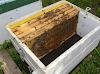Σφίξιμο μελισσιών και τα χειρότερα λάθη: Πως γίνεται πιο αποτελεσματικά ο χειρισμός το χειμώνα;