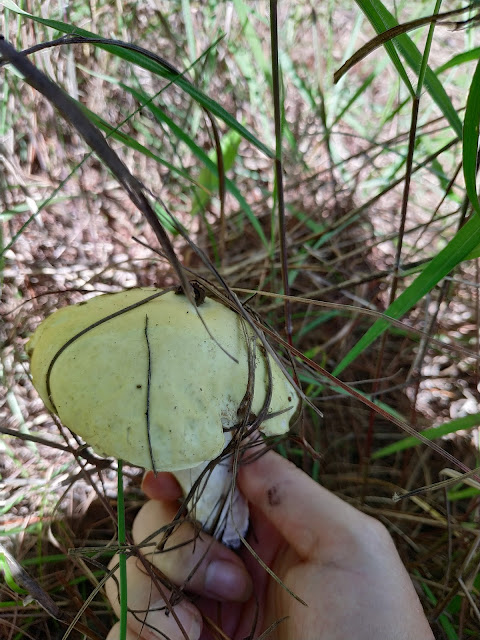hái nấm