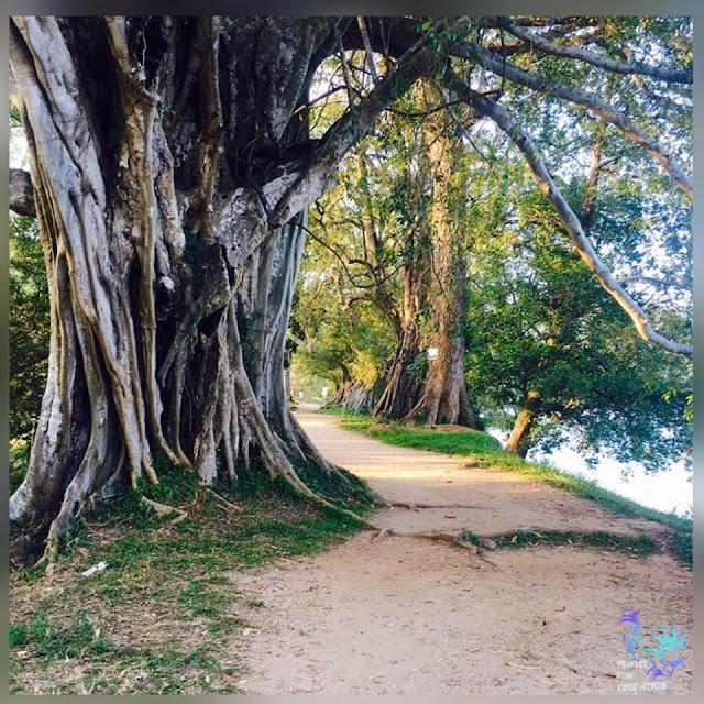 බුලතා සැදු - හරබර වැව 🌿🌾 (Sorabora Lake) - Your Choice Way