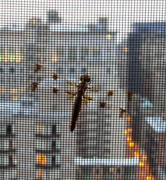 A Visit From A Dragonfly And Its Symbolism - Being Ron