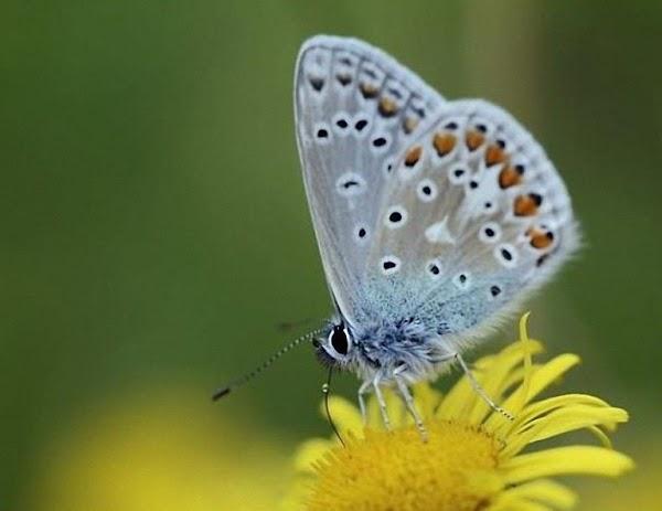 ARMAGEDON ECOLÓGICO: Las Mariposas Están Desapareciendo En Reino Unido.