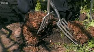 cutting ferns