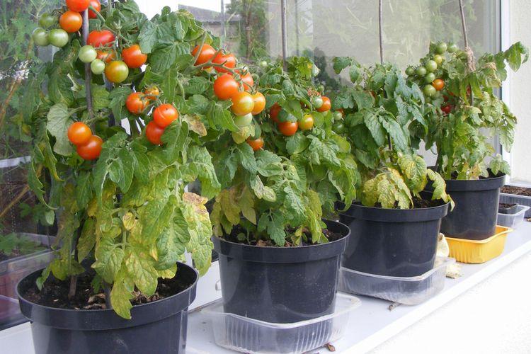 9-cara-mudah-berkebun-sayur-kontainer