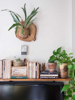 Plantas que fizeram sucesso no passado voltam a ocupar espaço na decoração