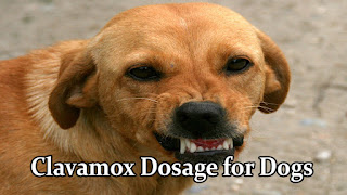 clavamox-dosage-for-dogs-by-weight
