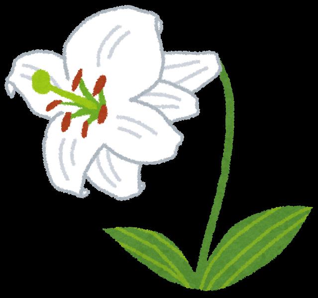 ユリのイラスト花 かわいいフリー素材集 いらすとや