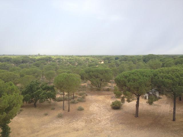 El Parque de Doñana