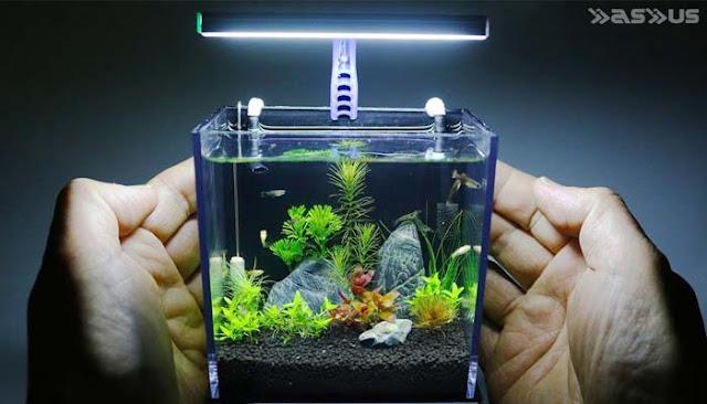 10 Cara Ampuh Membersihkan Kaca Aquarium Yang Berkerak, Kusam, dan Berjamur