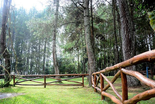 Pine Hill Cibodas - Bandung