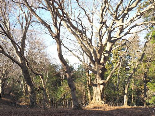 標高の割には巨木・大木が目立つ