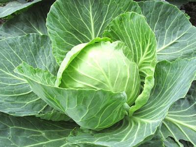 Kasyat sayur kol untuk kesehatan