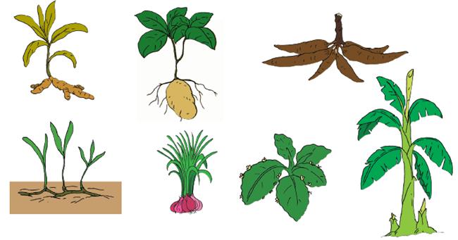 Pembelajaran 1 Subtema 4 Pertumbuhan dan Perkembangan Tumbuhan