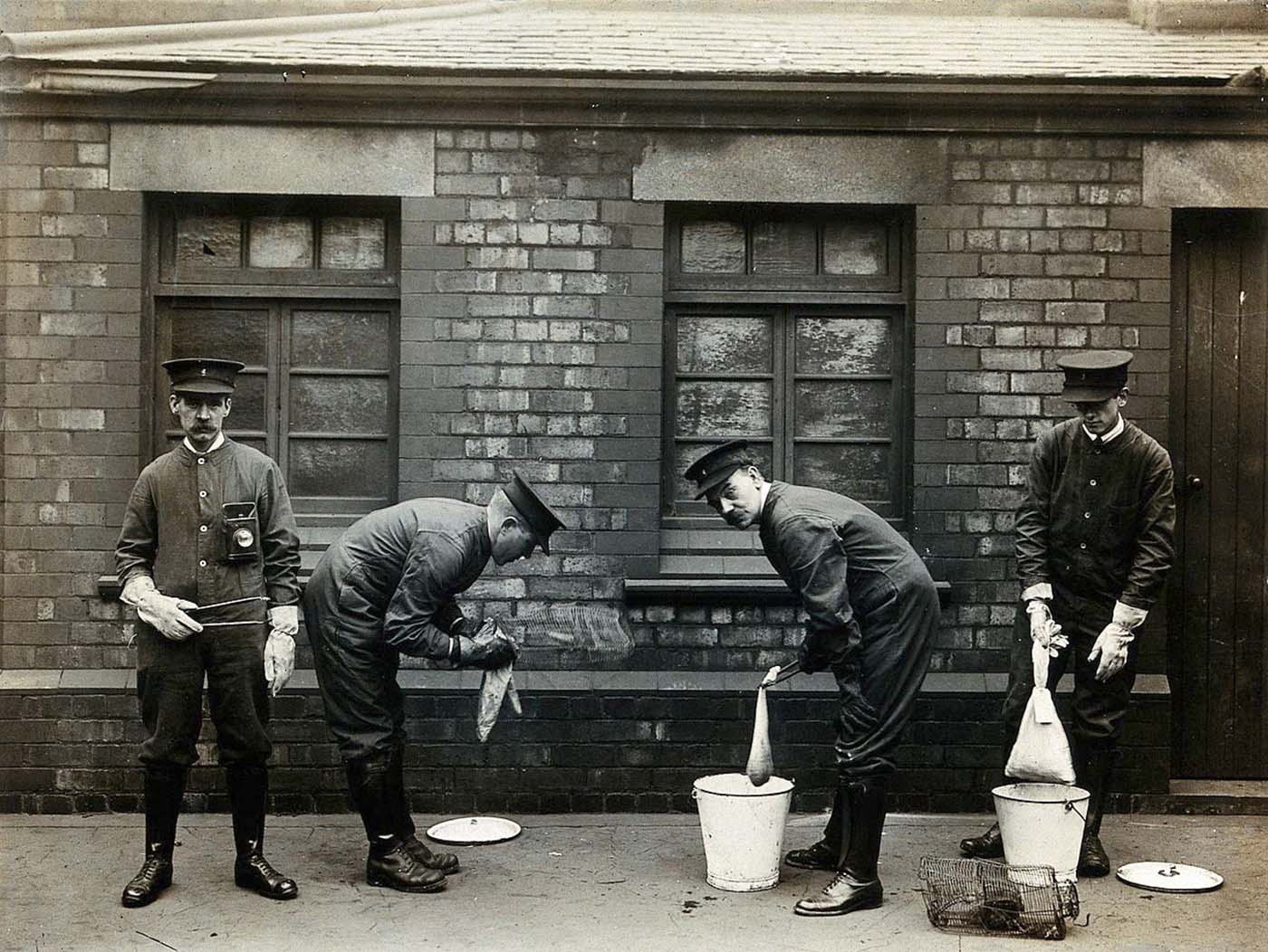 Liverpool Port Sanitary Authority rat-catchers dipping rats in buckets of petrol to kill fleas for plague control. 1900s.