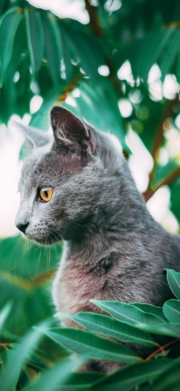 خلفية قطة رمادية تجلس بين أوراق الشجر الخضراء