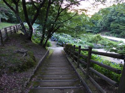 山田池公園のあじさい園 階段