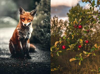 狐狸與蘋果