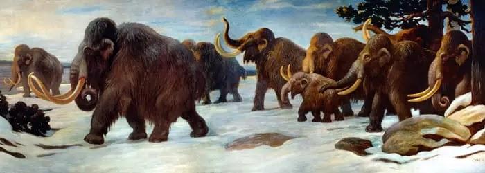 प्राचीन मैमथ और मास्टोडॉन का इतिहास, Mammoths Mastodons In Hindi, Mammoths In Hindi, mammoth in hindi, मैमथ, mammoth animal in hindi, woolly mammoth in hindi, मैमथ हाथी, maimat, memath hathi, मैमथ आज, mammoth hindi, mammoth purvaj hai,