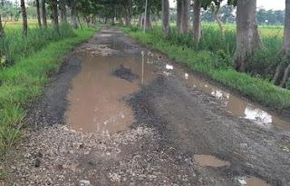 Jalan di Blora Rusak Parah, Bupati: Butuh Rp 3 Triliun untuk Dicor Semua