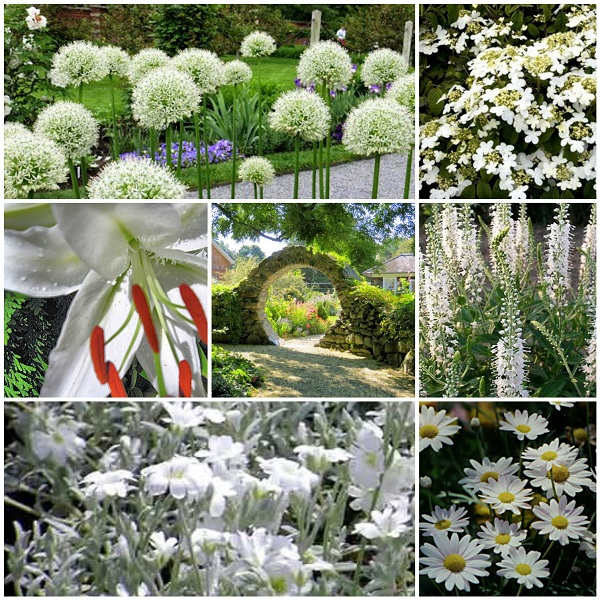 A guide to northeastern gardening this month 39 s color in for Moon garden designs